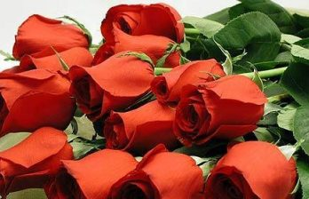 <!--:ru-->Розы в