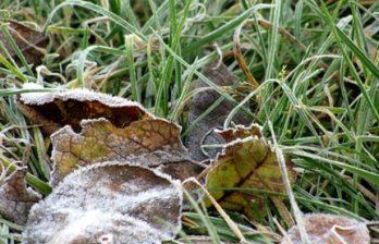 <!--:ru-->На следующей неделе ожидаются первые заморозки<!--:-->