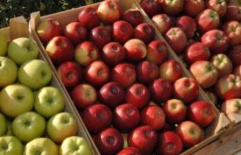 <!--:ru-->Минсельхоз готовится объявить итоги тендера на поставку яблок в школы и детсады Молдовы<!--:-->