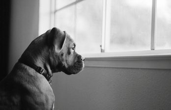 <!--:ru-->Видео забавного собачьего побега через окно<!--:-->