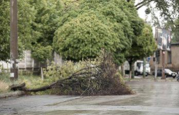 <!--:ru-->Кишиневские власти подсчитывают ущерб от ветра, бушевавшего на прошлой неделе<!--:-->