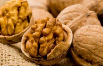 <!--:ru-->Все сорта ореха, которые есть в Молдове, можно было увидеть в селе Бардар<!--:-->