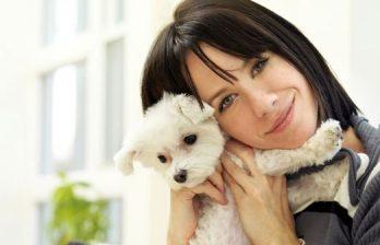 <!--:ru-->Собаки предпочитают ласку словесной похвале  <!--:-->
