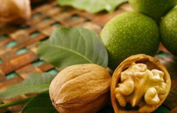 <!--:ru-->Источником доходов многих жителей севера Молдовы стали насаждения грецкого ореха<!--:-->