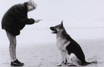 <!--:ru-->Канадский телеведущий пытался найти хозяина собаке в прямом эфире<!--:-->