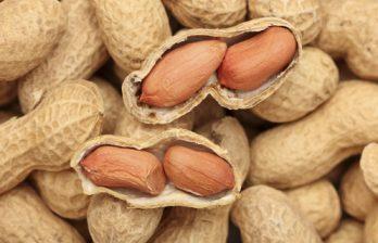 <!--:ru-->Световое облучение сделает арахис безопасным для аллергиков<!--:-->