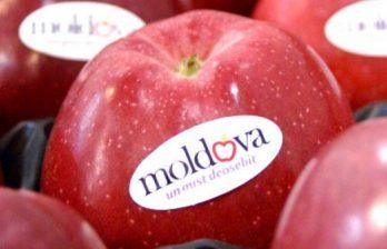 <!--:ru-->Молдавские яблоки попали на прилавки крупной сети супермаркетов в Румынии<!--:-->