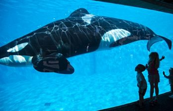 <!--:ru-->Дельфины обучили косаток своей речи<!--:-->