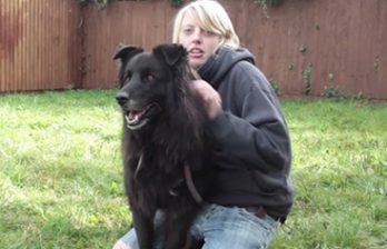 <!--:ru-->Цвет глаз помешал собаке найти хозяев (ВИДЕО)<!--:-->