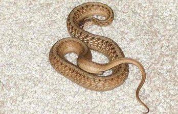 <!--:ru-->Робот-змея научился взбираться по песчаным дюнам<!--:-->