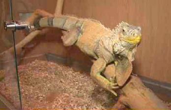 <!--:ru-->В Кишиневе открылась выставка экзотических животных<!--:-->