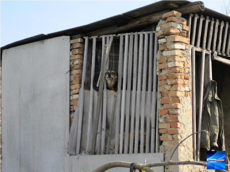 Приют для бездомных животных нуждается в помощи бельчан (Фото/Видео)