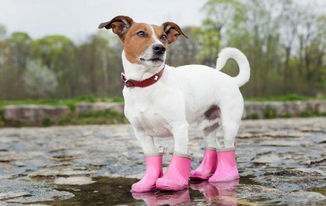 bigstock_dog_in_the_rain_62796631_840x560_650x410