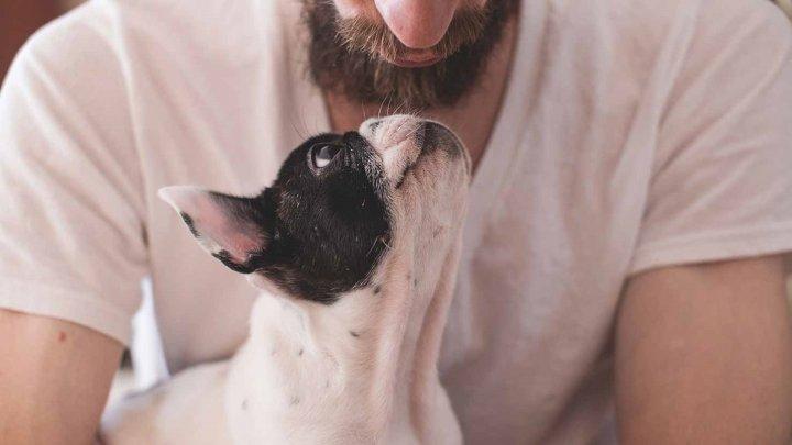 Ученые: В мужской бороде нашли больше бактерий, чем в собачьей шерсти