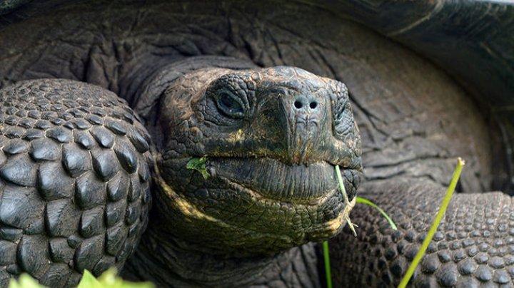 Редчайшая 90-летняя черепаха умерла из-за искусственного оплодотворения