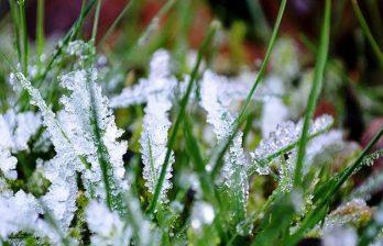 Метеорологи прогнозируют заморозки в Молдове