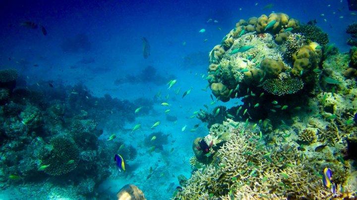 Ученые обнаружили новую форму жизни в океане