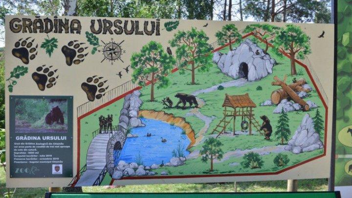 В Кишиневском зоопарке начали строительство нового вольера для двух бурых медведей
