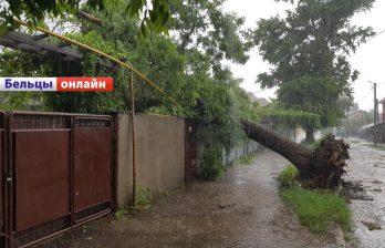 Вчера в Бельцах на мужчину упало дерево во время урагана