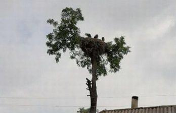 В Сороках семью аистов спасали в течение двух дней (ФОТО)