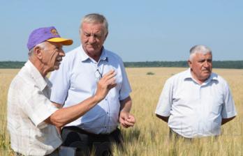 Бельцкие ученые выводят новые сорта пшеницы