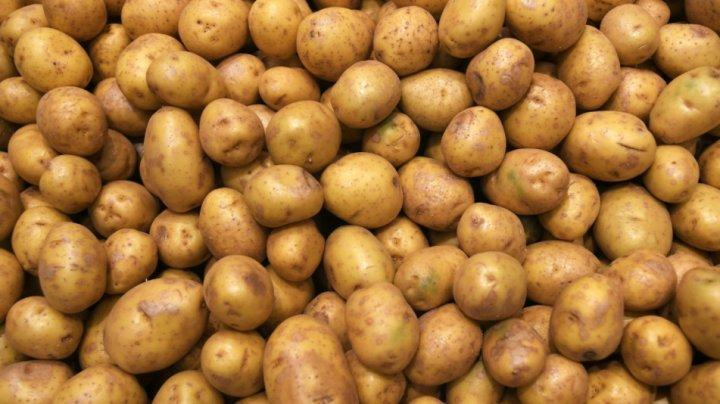 В Кишиневе установили первую в стране линию по сортировке и упаковке картофеля