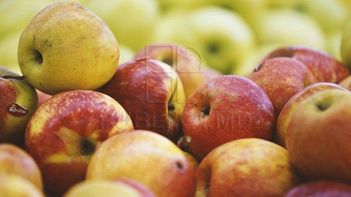 В Сорокской крепости прошел девятый фестиваль яблок