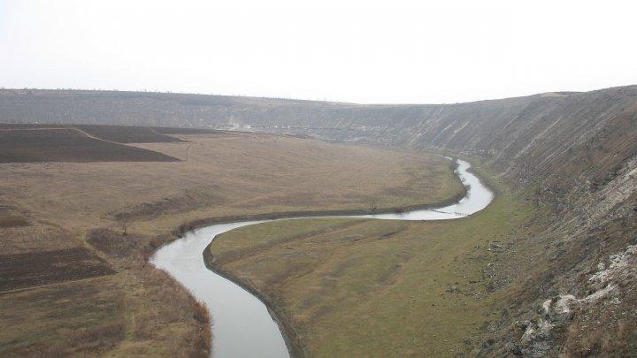 Берега молдавских рек укрепят лесными насаждениями