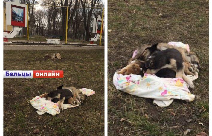 (18+) Шокирующие фото с парка Победы в Бельцах