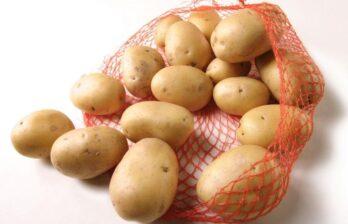Молдавские производители картофеля не могут найти рынки сбыта