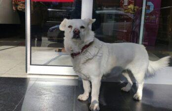 (ВИДЕО) Трогательная встреча: собака прождала хозяина возле больницы до его выписки