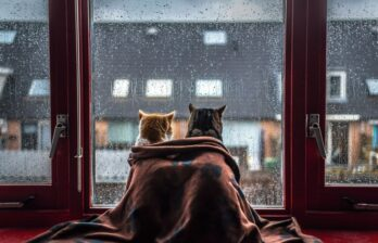 В Бельцах ожидаются дожди уже через несколько дней